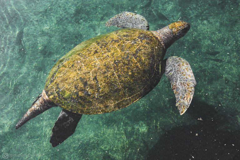 כבר בכניסה ישנה בריכה עם צבי ים ענקיים שאפשר לבחון מקרוב