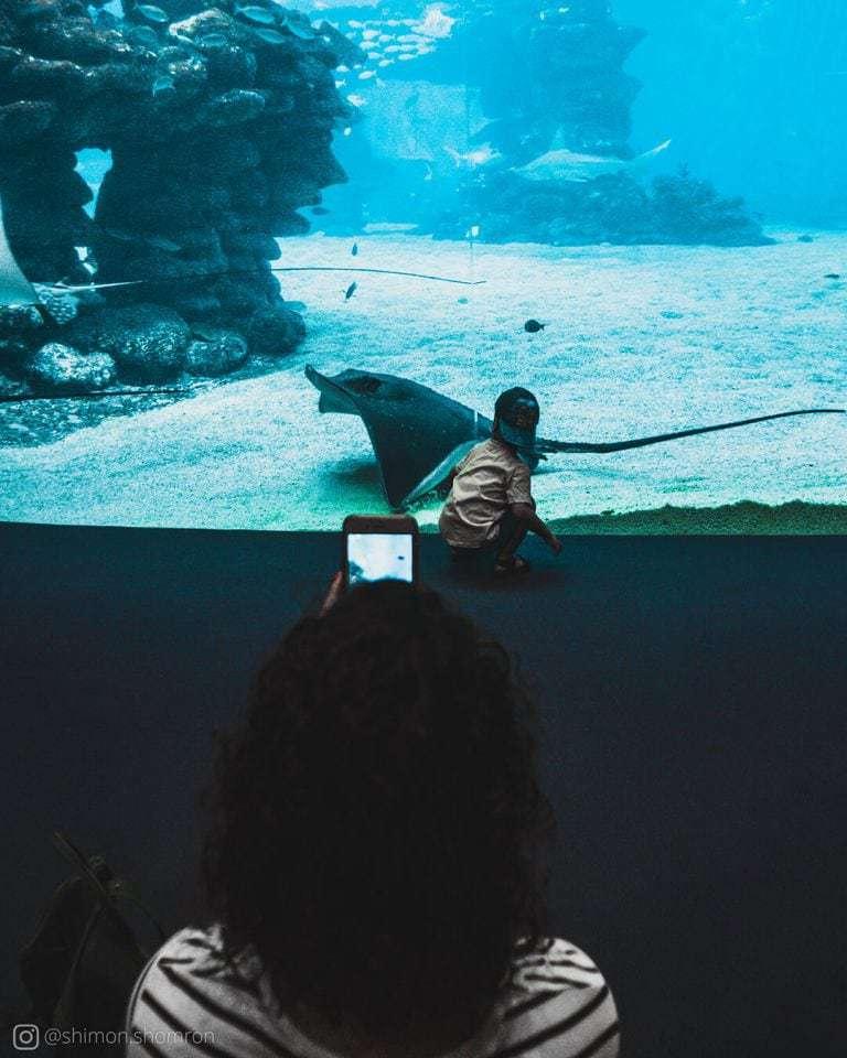 האקווריום הענק הוא מתקן מרשים שמכיל סוגי דגים ומינים אקזוטיים שלא מובן מאליו לפגוש בגודל מלא