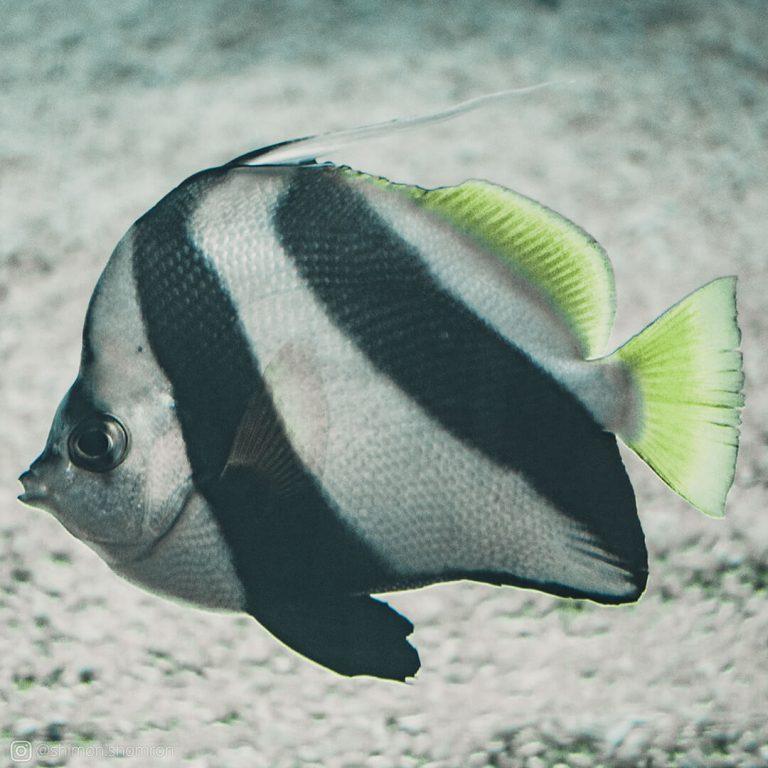 מבט על ייחודם של מינים רבים של דגים