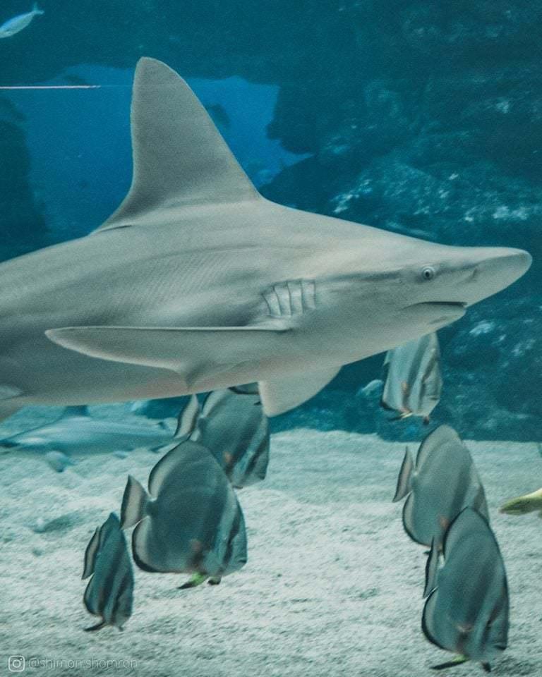 באקווריום הגדול ניתן לראות כרישים גדולים ומסוגים שונים