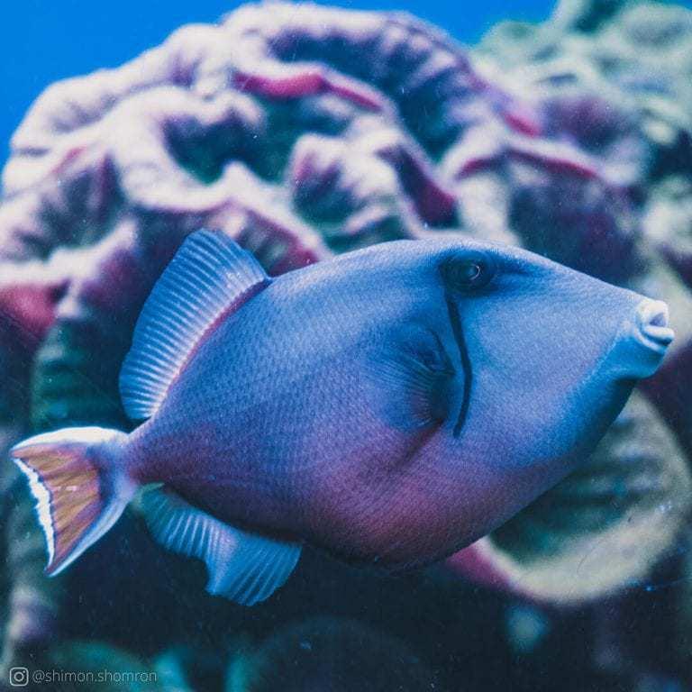 סיור במקום מעניק הצצה לספקטרום רחב של צבעים מיוחדים הקיימים מתחת לפני הים